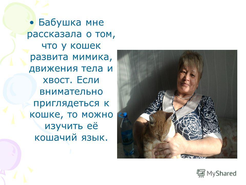 Бабушка мне рассказала о том, что у кошек развита мимика, движения тела и хвост. Если внимательно приглядеться к кошке, то можно изучить её кошачий язык.