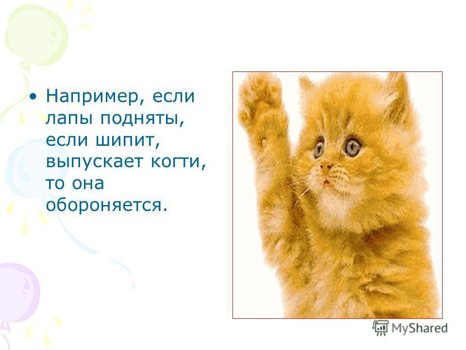 Например, если лапы подняты, если шипит, выпускает когти, то она обороняется.