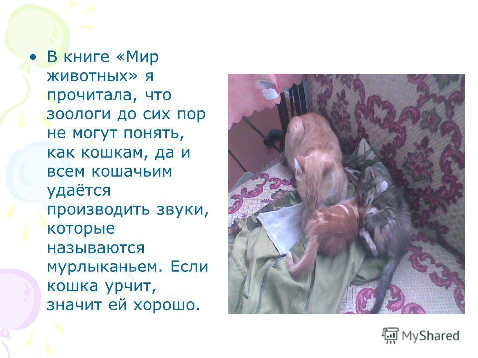 В книге «Мир животных» я прочитала, что зоологи до сих пор не могут понять, как кошкам, да и всем кошачьим удаётся производить звуки, которые называются мурлыканьем. Если кошка урчит, значит ей хорошо.