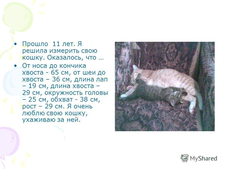 Прошло 11 лет. Я решила измерить свою кошку. Оказалось, что … От носа до кончика хвоста - 65 см, от шеи до хвоста – 36 см, длина лап – 19 см, длина хвоста – 29 см, окружность головы – 25 см, обхват - 38 см, рост – 29 см. Я очень люблю свою кошку, уха