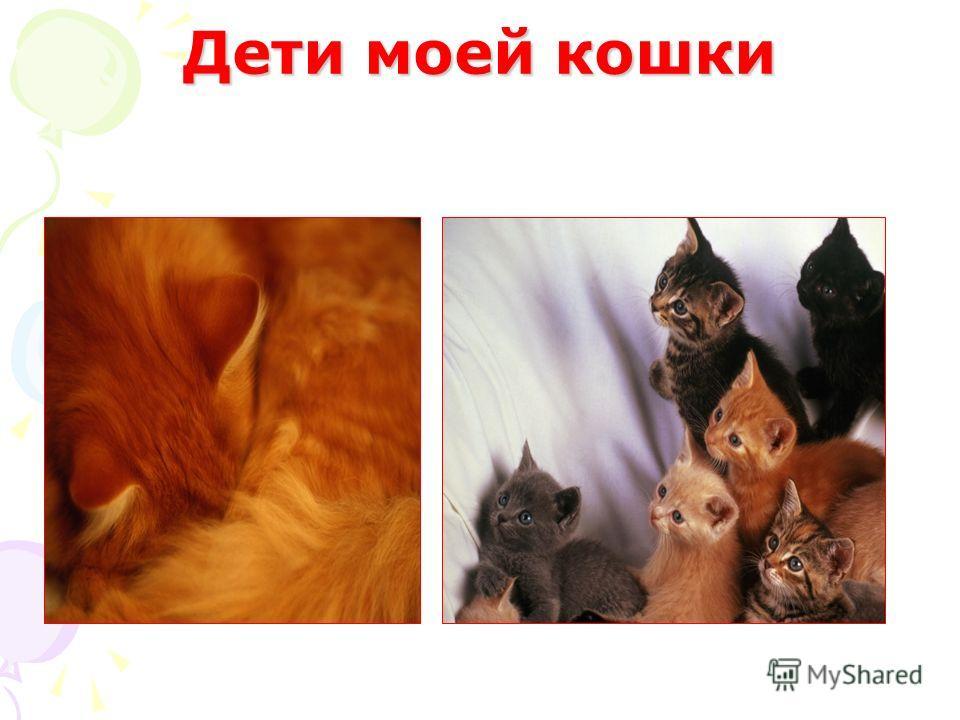 Дети моей кошки