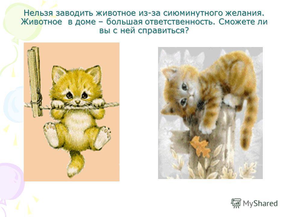 Нельзя заводить животное из-за сиюминутного желания. Животное в доме – большая ответственность. Сможете ли вы с ней справиться?
