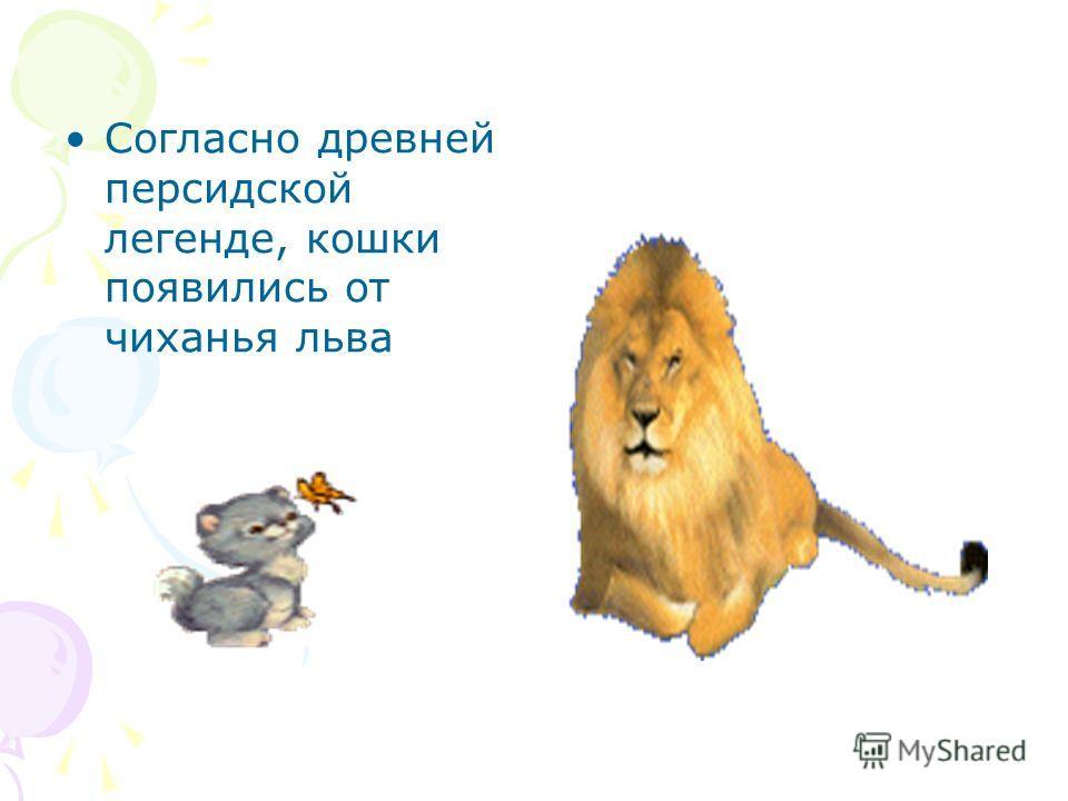 Согласно древней персидской легенде, кошки появились от чиханья льва