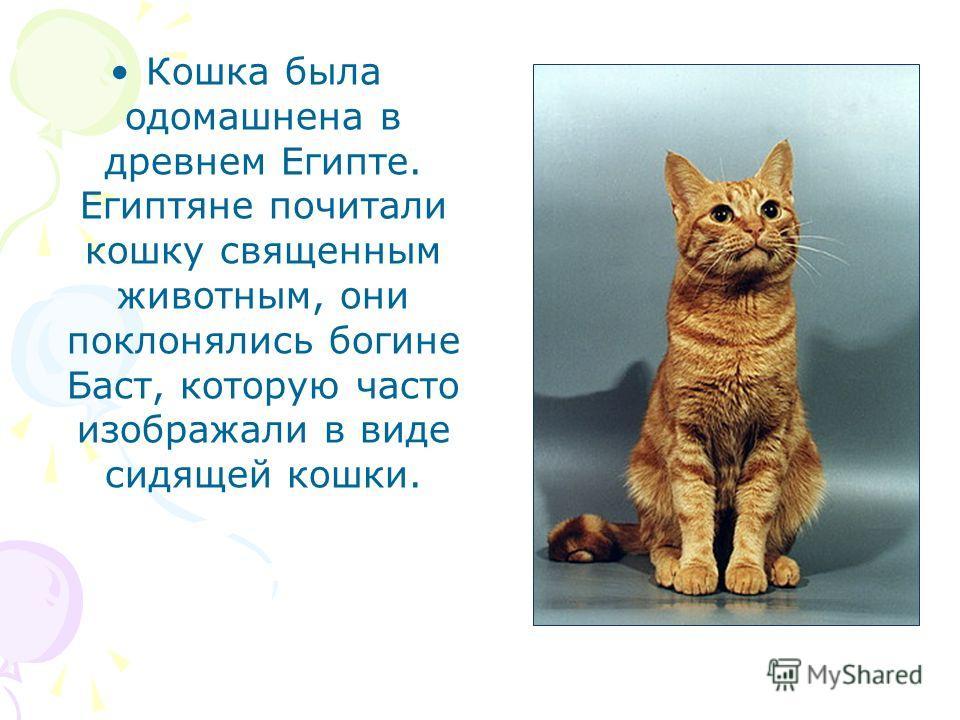 Кошка была одомашнена в древнем Египте. Египтяне почитали кошку священным животным, они поклонялись богине Баст, которую часто изображали в виде сидящей кошки.