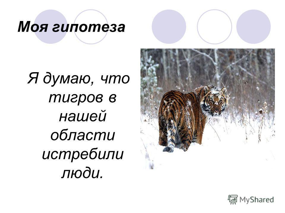 Моя гипотеза Я думаю, что тигров в нашей области истребили люди.