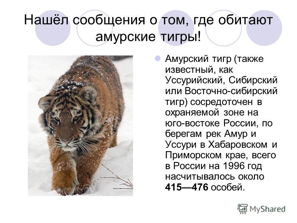 Нашёл сообщения о том, где обитают амурские тигры! Амурский тигр (также известный, как Уссурийский, Сибирский или Восточно-сибирский тигр) сосредоточен в охраняемой зоне на юго-востоке России, по берегам рек Амур и Уссури в Хабаровском и Приморском к