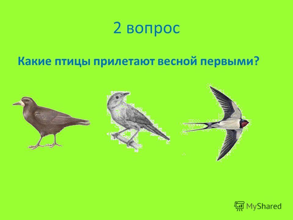 2 вопрос Какие птицы прилетают весной первыми?
