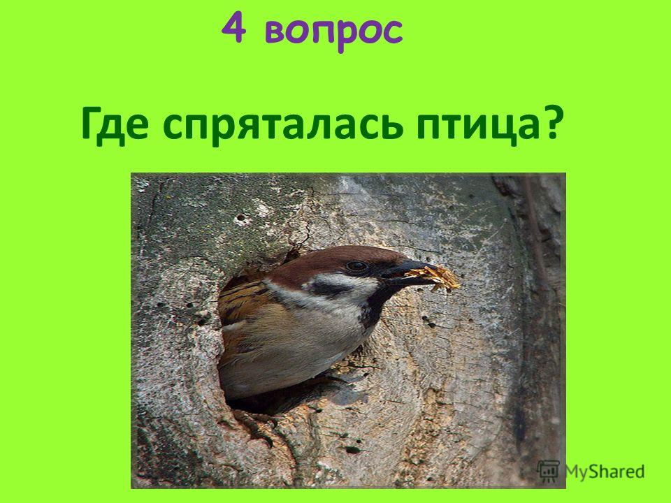 4 вопрос Где спряталась птица?