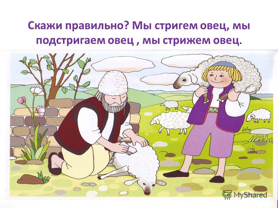 Скажи правильно? Мы стригем овец, мы подстригаем овец, мы стрижем овец.