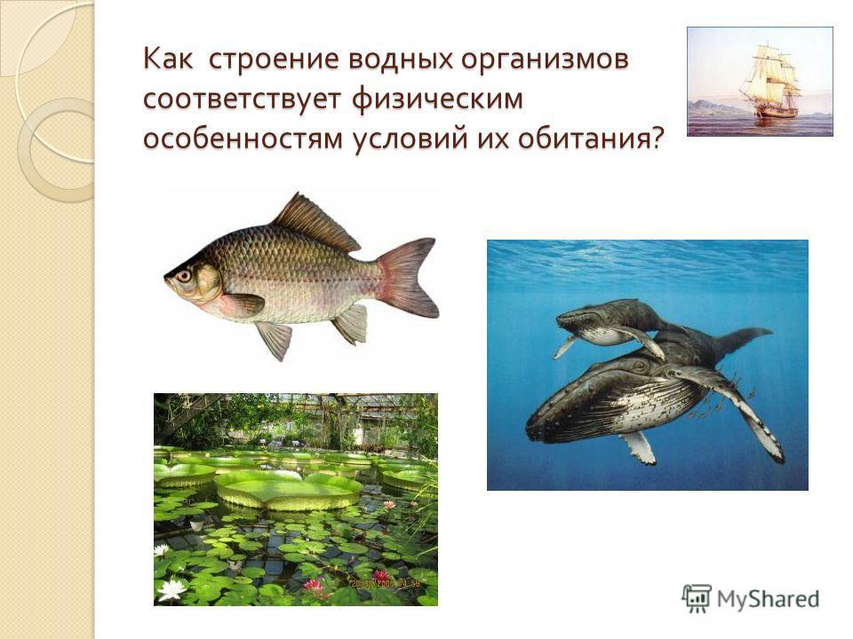 Как строение водных организмов соответствует физическим особенностям условий их обитания ?