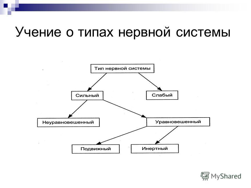 Учение о типах нервной системы