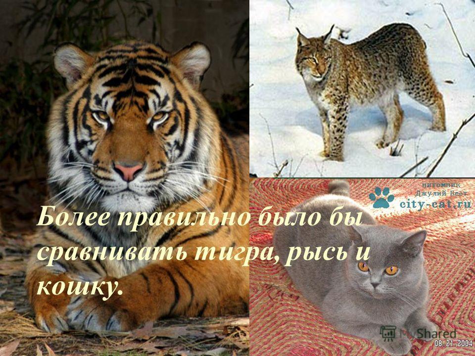 Более правильно было бы сравнивать тигра, рысь и кошку.