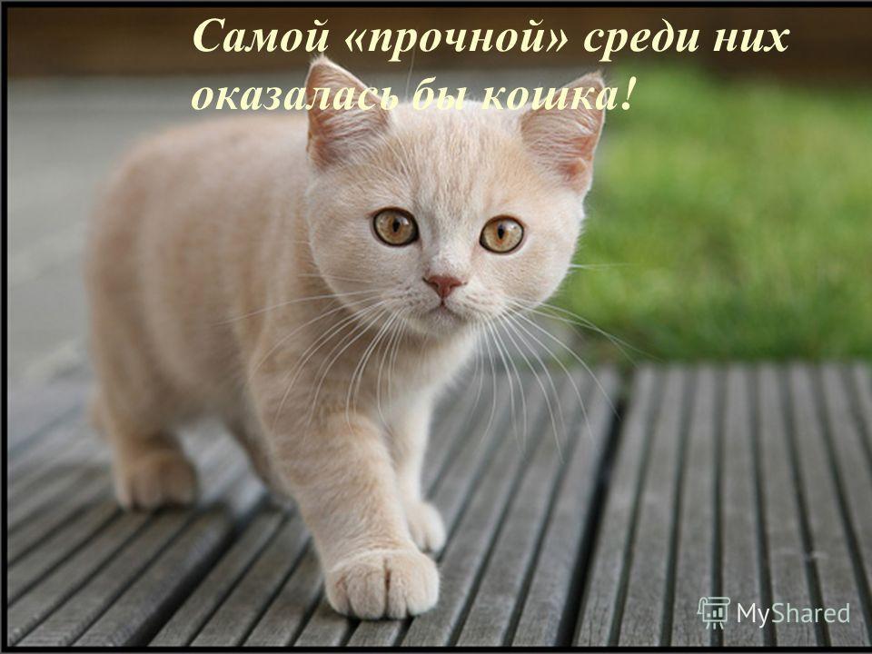 Самой «прочной» среди них оказалась бы кошка!