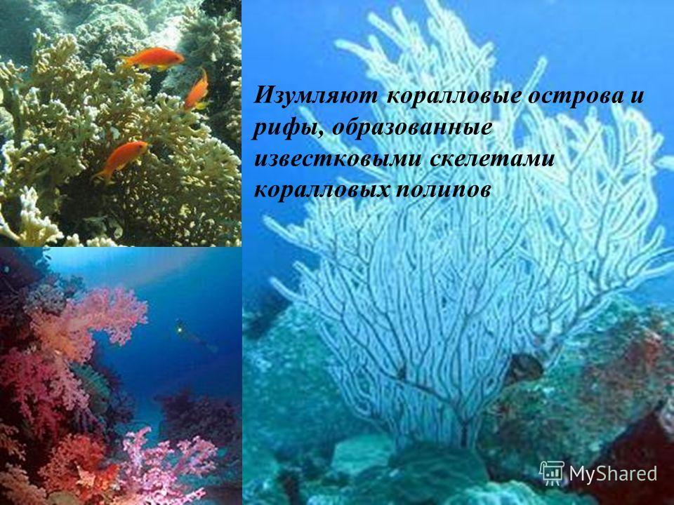 Изумляют коралловые острова и рифы, образованные известковыми скелетами коралловых полипов
