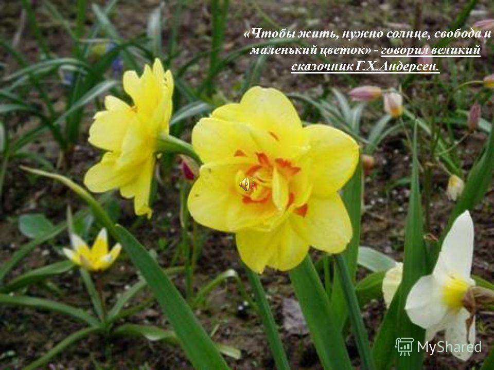 «Чтобы жить, нужно солнце, свобода и маленький цветок» - говорил великий сказочник Г.Х.Андерсен.