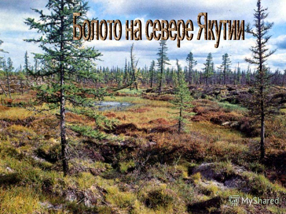 Зарастание озера и превращение в болото