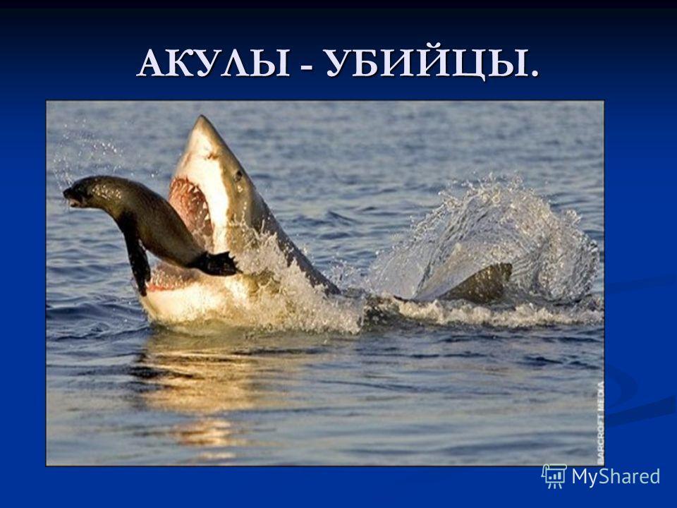 АКУЛЫ - УБИЙЦЫ.