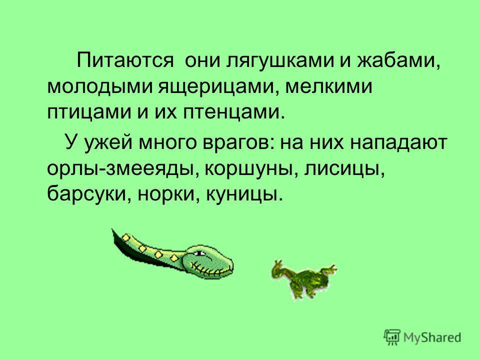 Питаются они лягушками и жабами, молодыми ящерицами, мелкими птицами и их птенцами. У ужей много врагов: на них нападают орлы-змееяды, коршуны, лисицы, барсуки, норки, куницы.