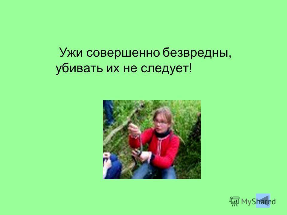 Ужи совершенно безвредны, убивать их не следует!