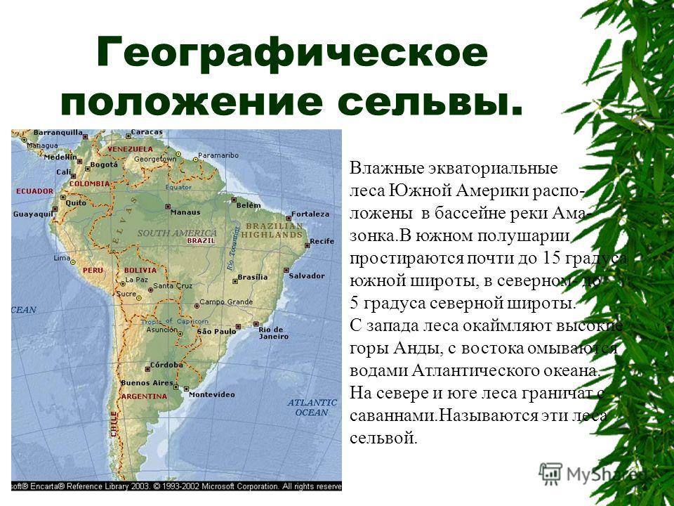 Географическое положение сельвы. Влажные экваториальные леса Южной Америки распо- ложены в бассейне реки Ама- зонка.В южном полушарии простираются почти до 15 градуса южной широты, в северном- до 5 градуса северной широты. С запада леса окаймляют выс