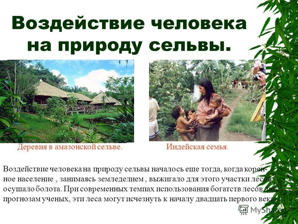 Воздействие человека на природу сельвы. Деревня в амазонской сельве.Индейская семья. Воздействие человека на природу сельвы началось еще тогда, когда корен- ное население, занимаясь земледелием, выжигало для этого участки лесов, осушало болота. При с