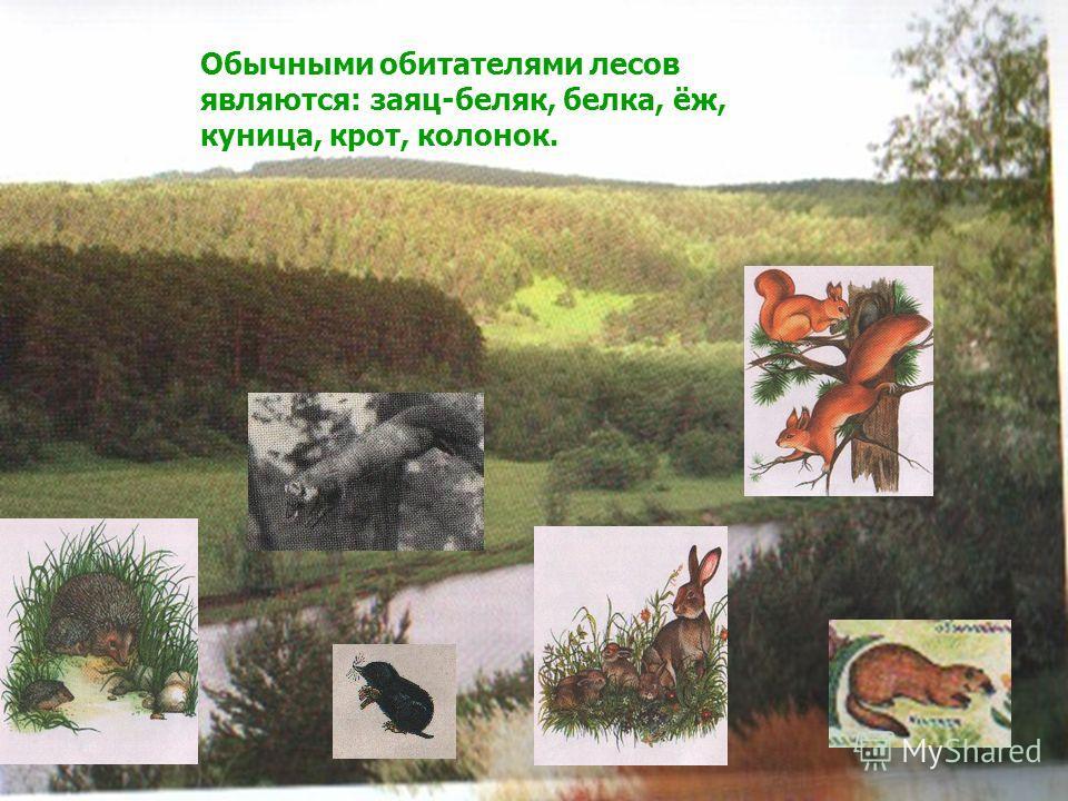 Обычными обитателями лесов являются: заяц-беляк, белка, ёж, куница, крот, колонок.