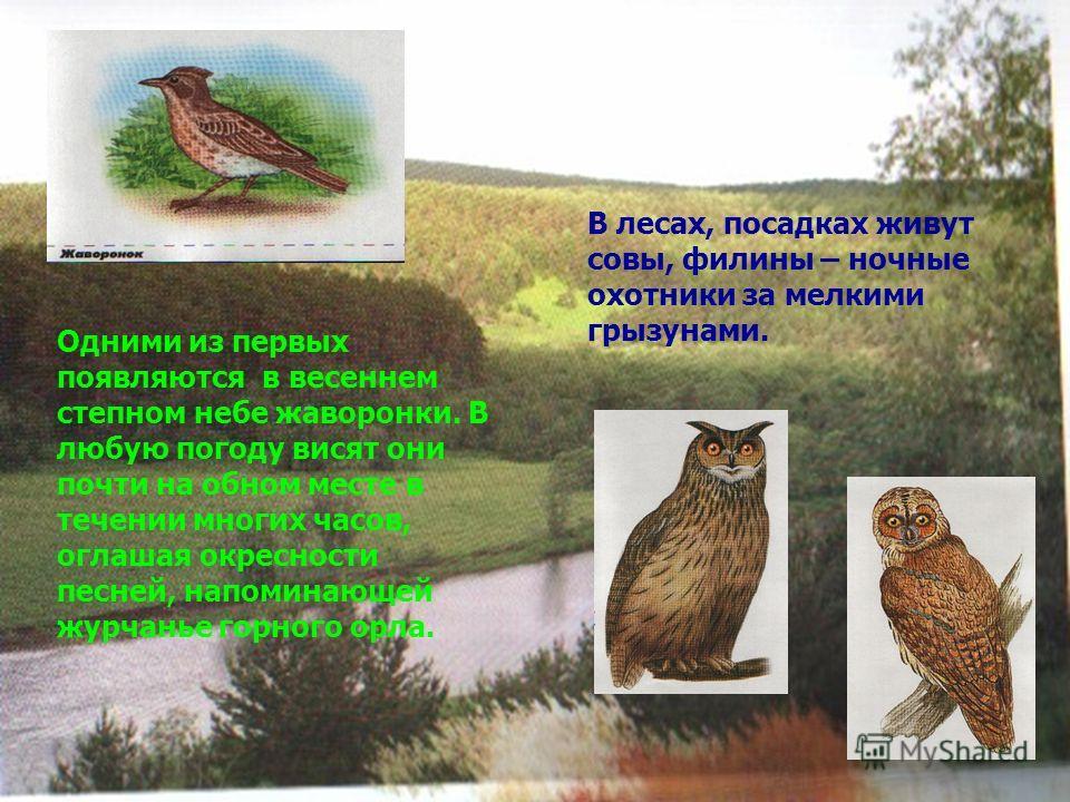 В лесах, посадках живут совы, филины – ночные охотники за мелкими грызунами. Одними из первых появляются в весеннем степном небе жаворонки. В любую погоду висят они почти на обном месте в течении многих часов, оглашая окресности песней, напоминающей