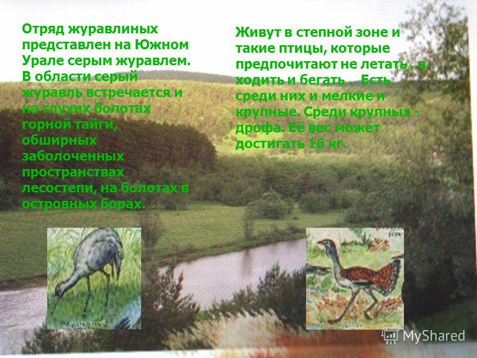 Отряд журавлиных представлен на Южном Урале серым журавлем. В области серый журавль встречается и на глухих болотах горной тайги, обширных заболоченных пространствах лесостепи, на болотах в островных борах. Живут в степной зоне и такие птицы, которые