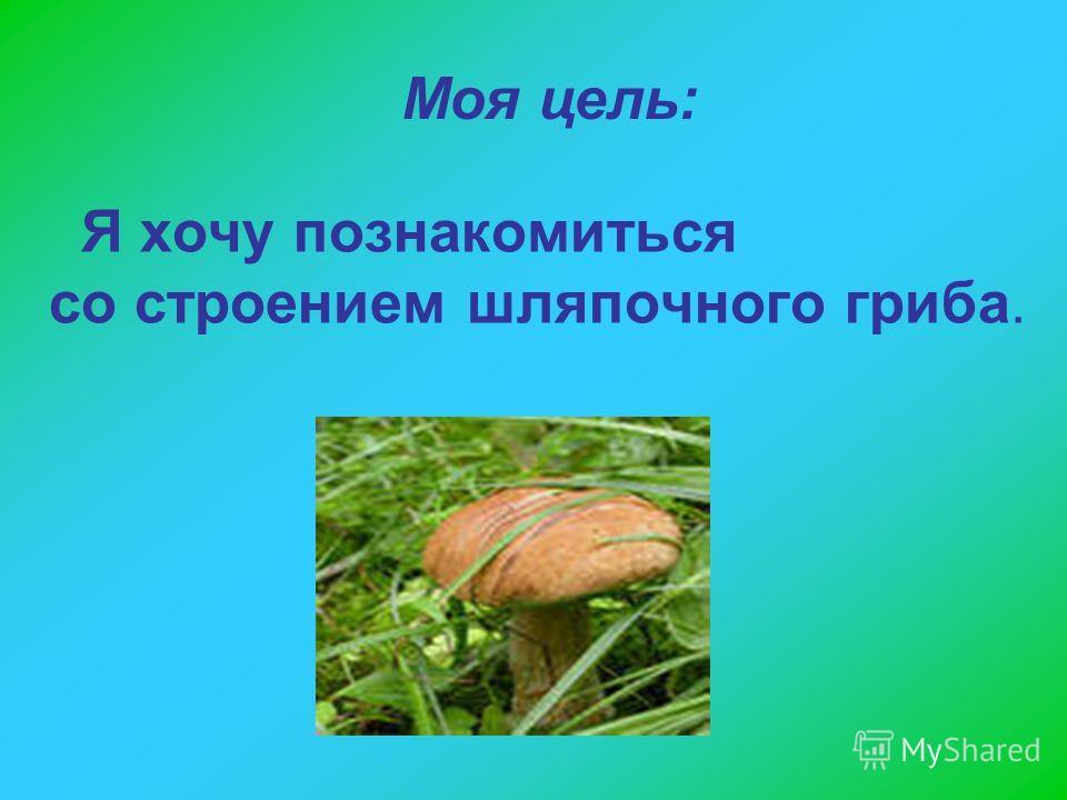 Я хочу познакомиться со строением шляпочного гриба. Моя цель: