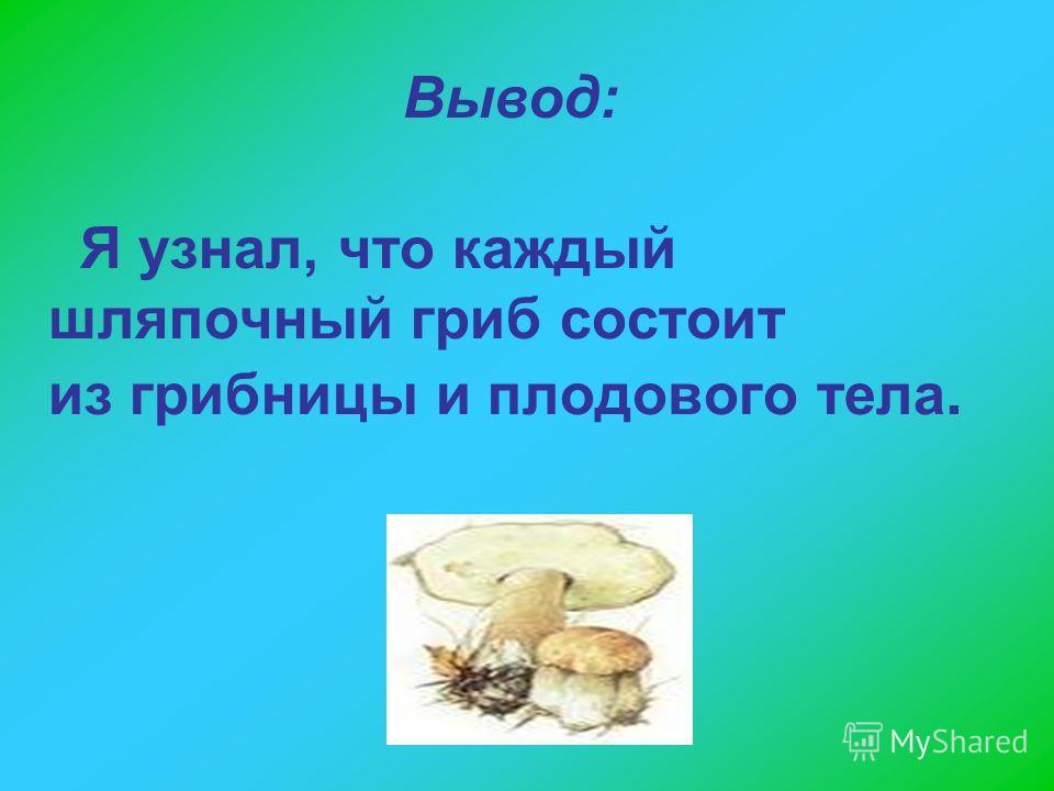 Я узнал, что каждый шляпочный гриб состоит из грибницы и плодового тела. Вывод: