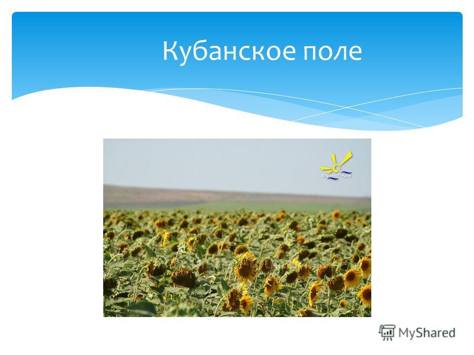Кубань – тополиный край