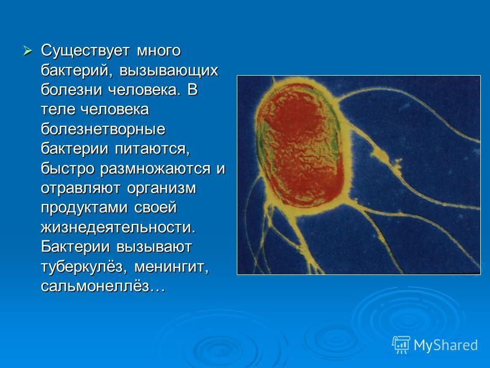 Существует много бактерий, вызывающих болезни человека. В теле человека болезнетворные бактерии питаются, быстро размножаются и отравляют организм продуктами своей жизнедеятельности. Бактерии вызывают туберкулёз, менингит, сальмонеллёз… Существует мн