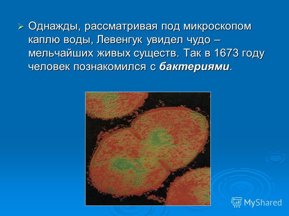 Однажды, рассматривая под микроскопом каплю воды, Левенгук увидел чудо – мельчайших живых существ. Так в 1673 году человек познакомился с бактериями. Однажды, рассматривая под микроскопом каплю воды, Левенгук увидел чудо – мельчайших живых существ. Т