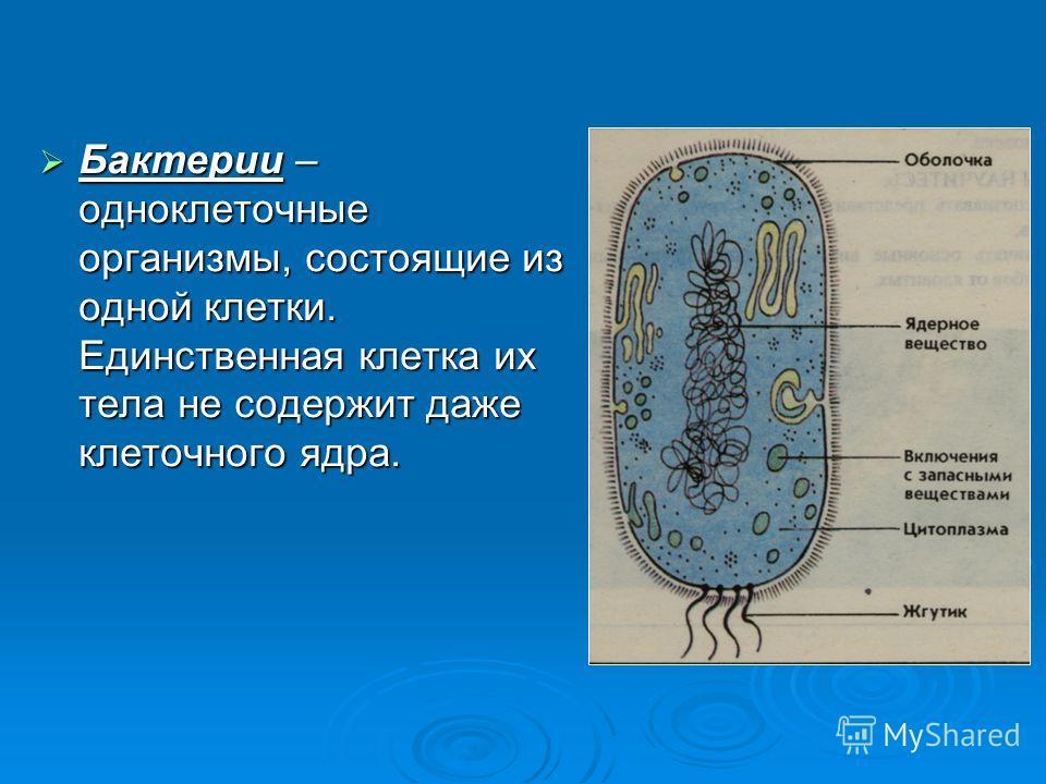 Бактерии – одноклеточные организмы, состоящие из одной клетки. Единственная клетка их тела не содержит даже клеточного ядра. Бактерии – одноклеточные организмы, состоящие из одной клетки. Единственная клетка их тела не содержит даже клеточного ядра.