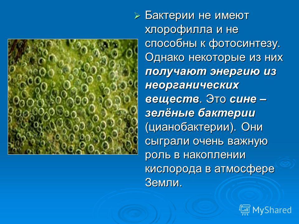 Бактерии не имеют хлорофилла и не способны к фотосинтезу. Однако некоторые из них получают энергию из неорганических веществ. Это сине – зелёные бактерии (цианобактерии). Они сыграли очень важную роль в накоплении кислорода в атмосфере Земли. Бактери