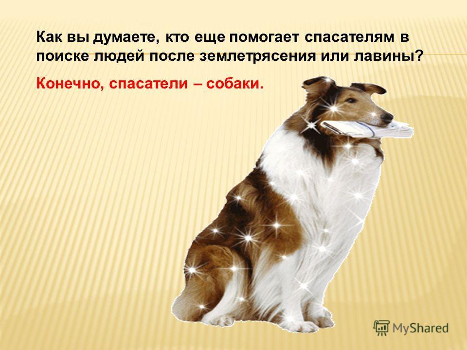Как вы думаете, кто еще помогает спасателям в поиске людей после землетрясения или лавины? Конечно, спасатели – собаки.