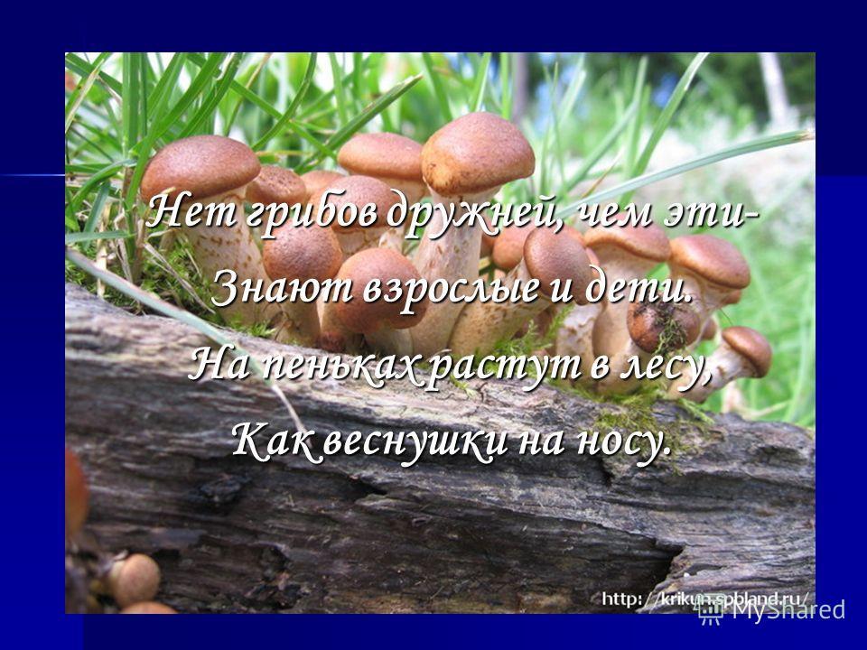 Нет грибов дружней, чем эти- Знают взрослые и дети. На пеньках растут в лесу, Как веснушки на носу.