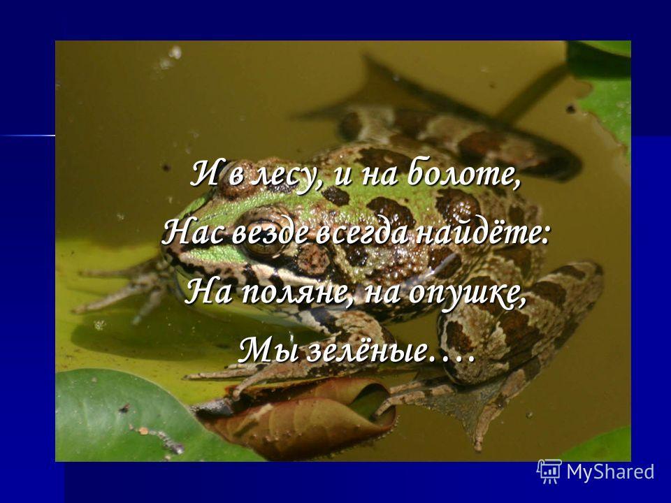 И в лесу, и на болоте, Нас везде всегда найдёте: На поляне, на опушке, Мы зелёные….