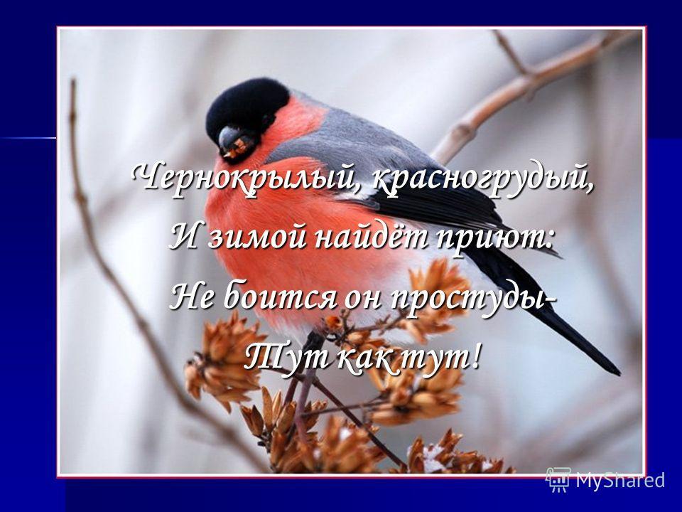 Чернокрылый, красногрудый, И зимой найдёт приют: Не боится он простуды- Тут как тут!