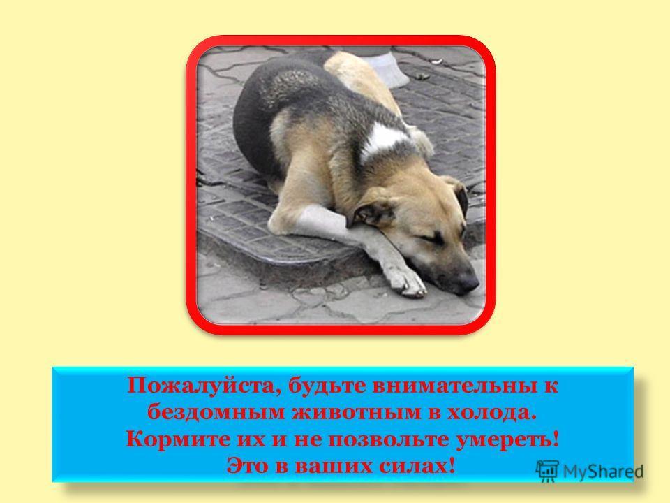 Пожалуйста, будьте внимательны к бездомным животным в холода. Кормите их и не позвольте умереть! Это в ваших силах! Пожалуйста, будьте внимательны к бездомным животным в холода. Кормите их и не позвольте умереть! Это в ваших силах!