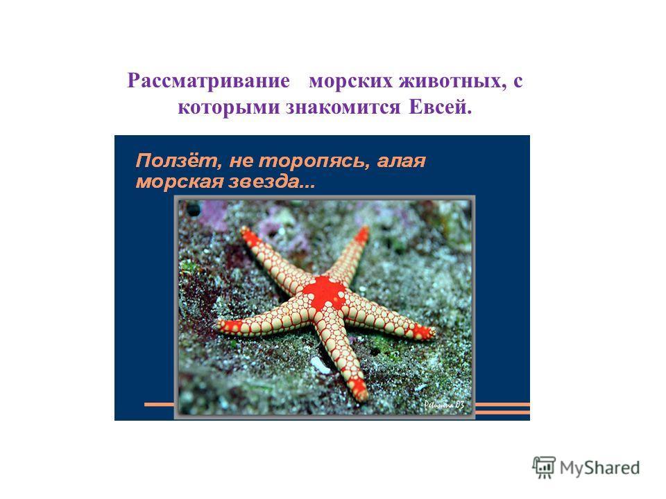 Рассматривание морских животных, с которыми знакомится Евсей.