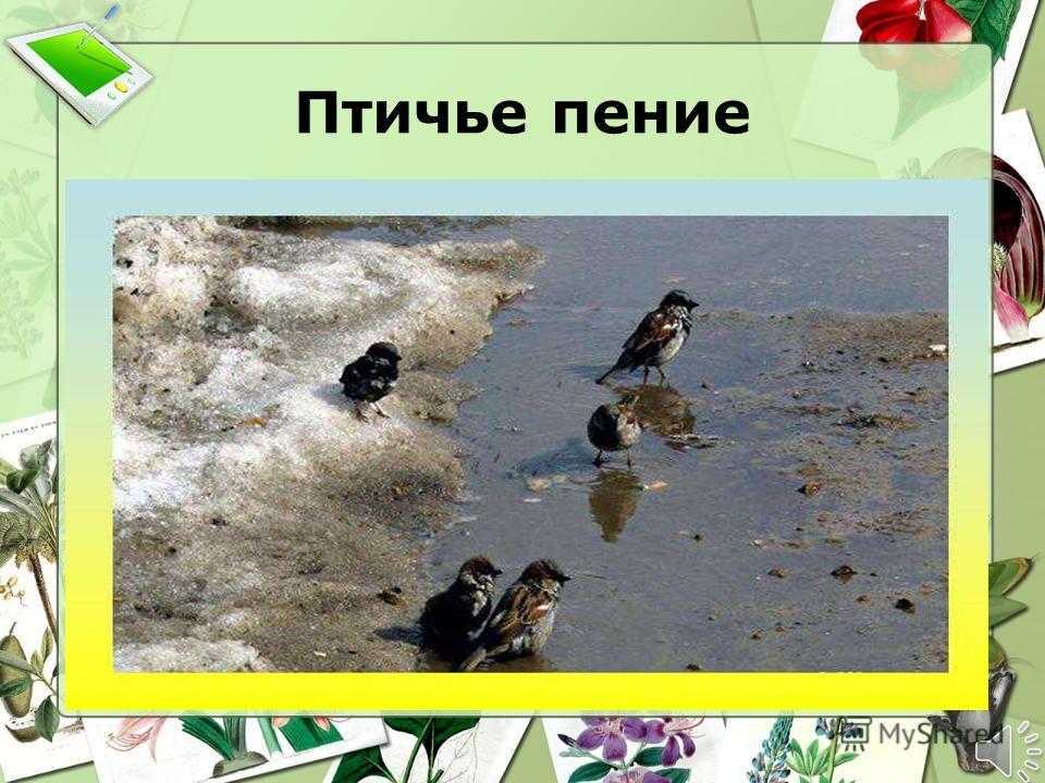 Птичье пение