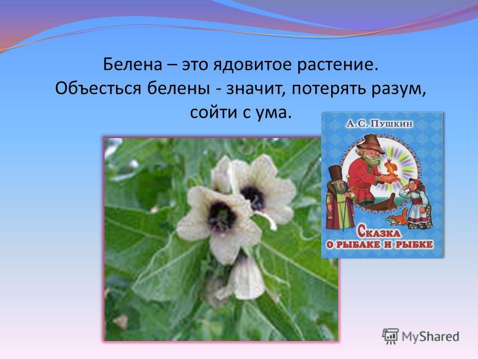 Белена – это ядовитое растение. Объесться белены - значит, потерять разум, сойти с ума.