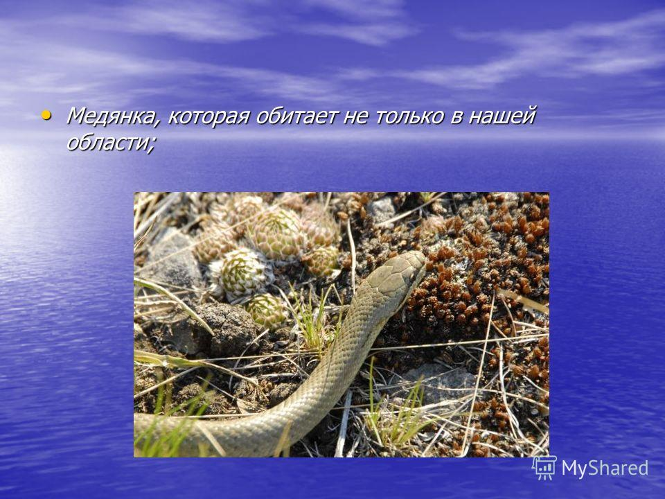 Среди пресмыкающихся в критическом положении находятся: Степная Гадюка, численность которой крайне низка и которая обитает в южной части Челябинской области;