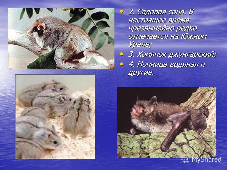 Также нуждаются в особом внимании такие виды млекопитающих нашей области, как: Также нуждаются в особом внимании такие виды млекопитающих нашей области, как: 1. Норка европейская. Вид с повсеместно сокращающейся численностью. Через Челябинскую област
