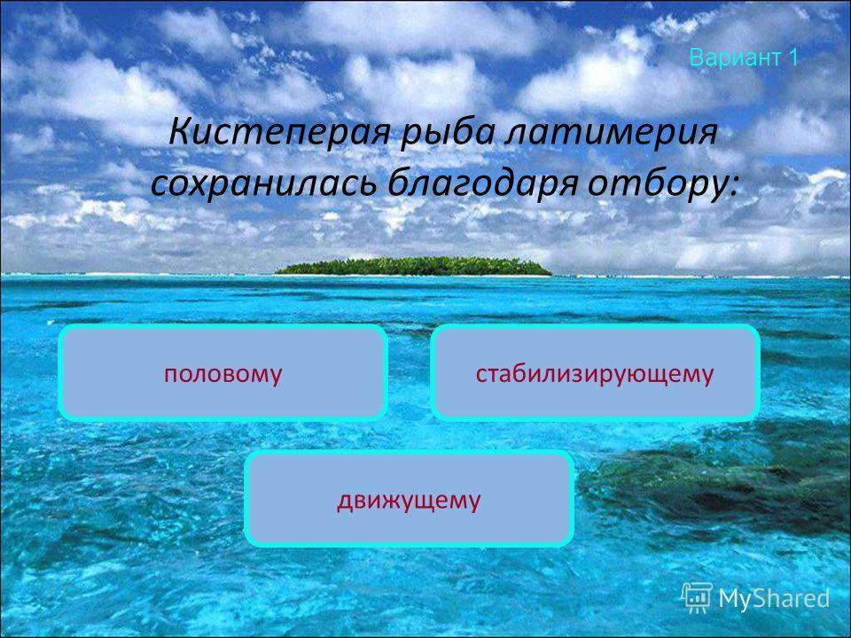 Вариант 1 Кистеперая рыба латимерия сохранилась благодаря отбору: стабилизирующемуполовому движущему