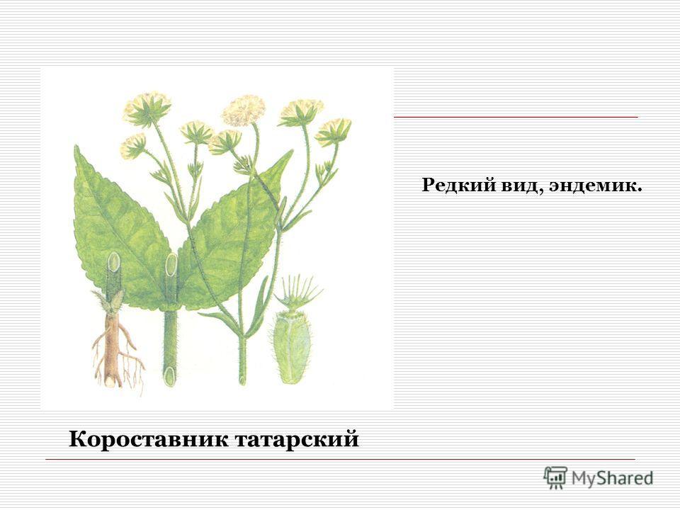 Короставник татарский Редкий вид, эндемик.