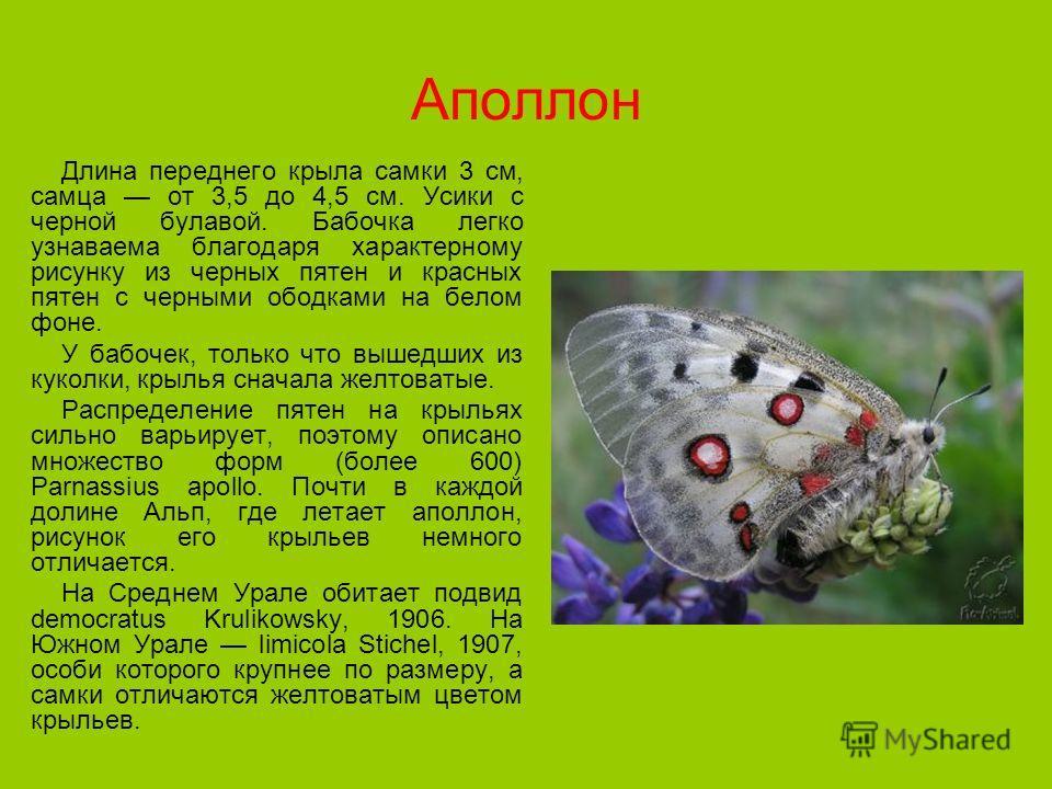 Аполлон Длина переднего крыла самки 3 см, самца от 3,5 до 4,5 см. Усики с черной булавой. Бабочка легко узнаваема благодаря характерному рисунку из черных пятен и красных пятен с черными ободками на белом фоне. У бабочек, только что вышедших из кукол