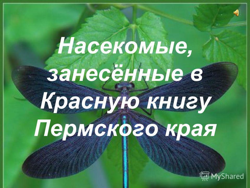 Насекомые, занесённые в Красную книгу Пермского края