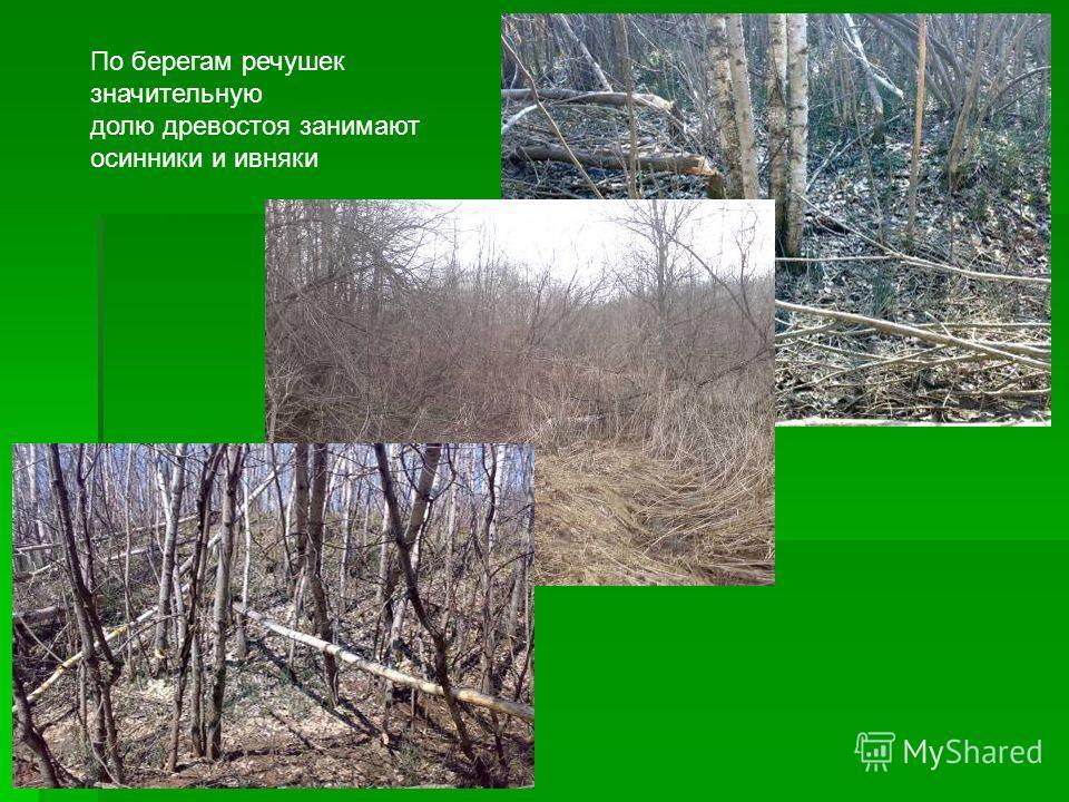 По берегам речушек значительную долю древостоя занимают осинники и ивняки